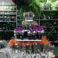 Expositor Flores