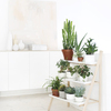 white-light-wood-and-green.-step-shelf-for-plants.-